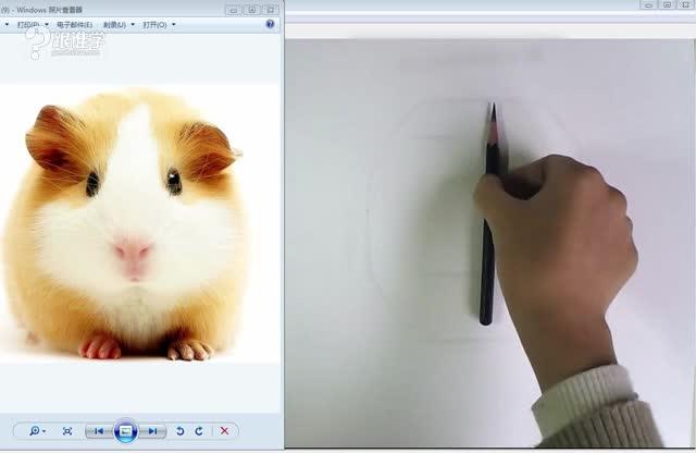 小动物素描,掌握方法,跟着老师一起画,一学就会.