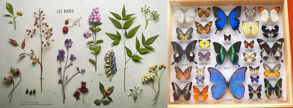 青丝科普科学之旅——制作植物标本