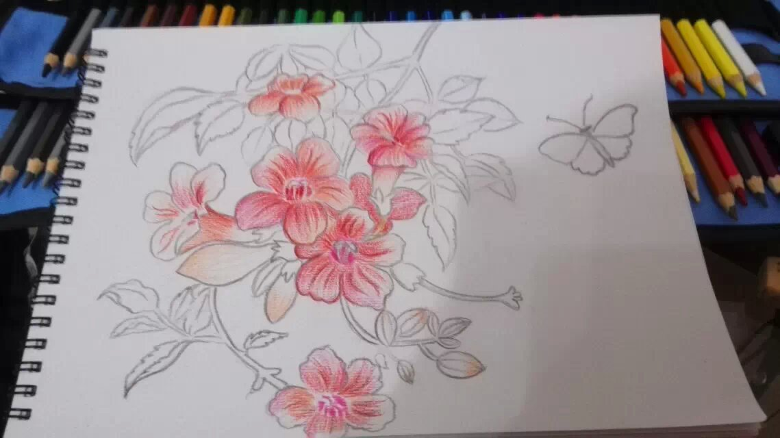 彩色铅笔画作柔和淡雅,画画所用的工具也十分简单,易于学习和掌握.