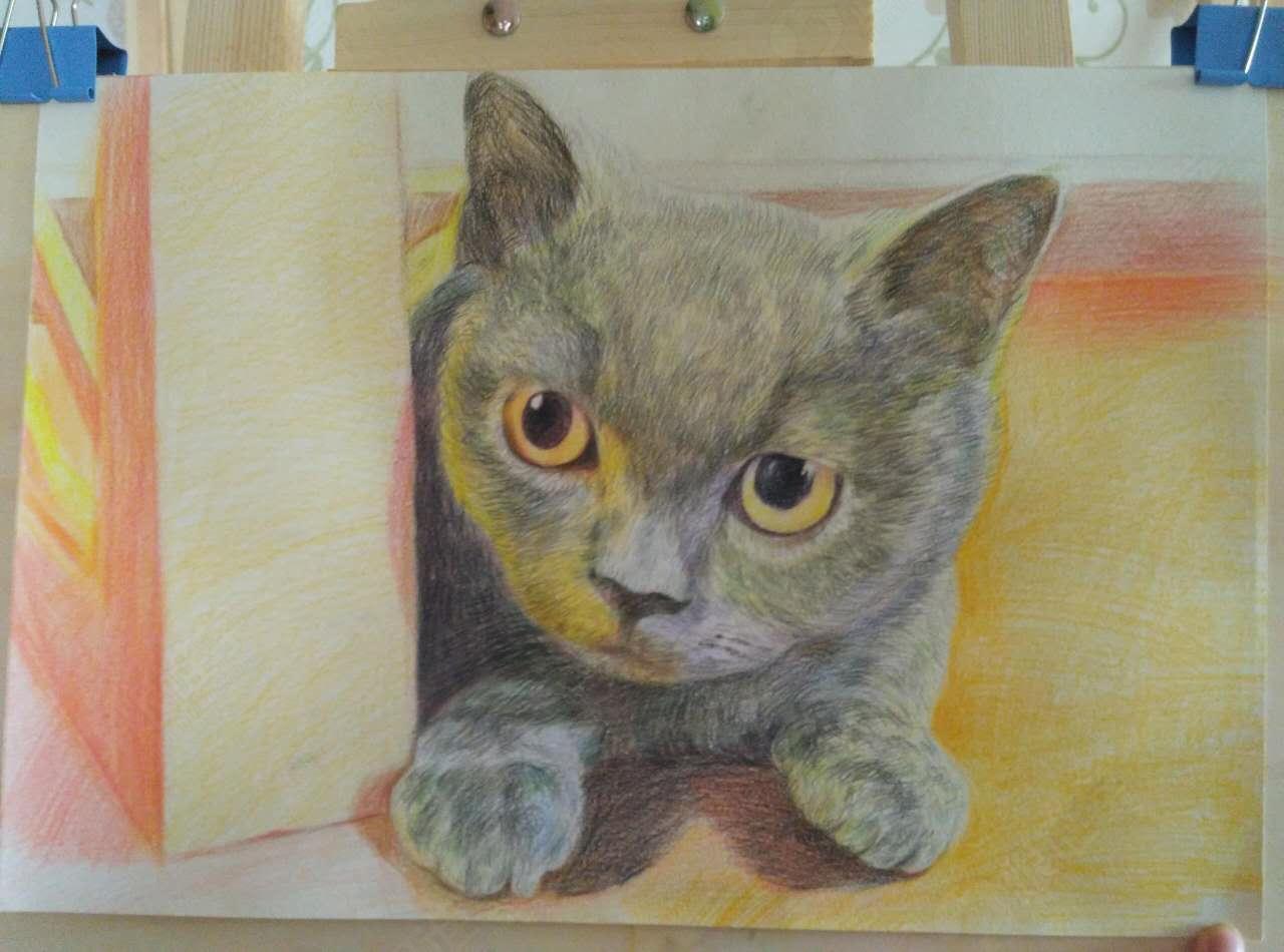 彩铅绘出萌猫画像