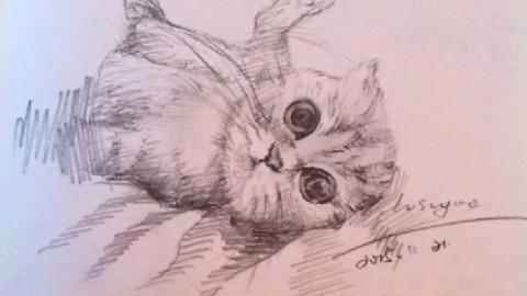 壁纸 动物 猫 猫咪 素描 小猫 桌面 480_270