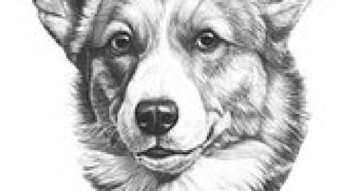 壁纸 动物 狗 狗狗 素描 480_270