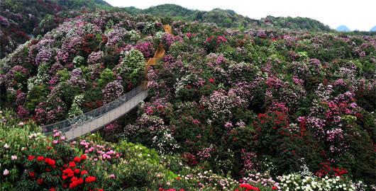 曲靖到贵州百里杜鹃风景名胜区