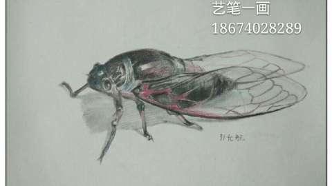 素描图片简单一点的昆虫步骤