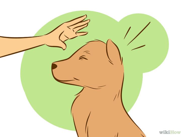 狗狗矢量图图标