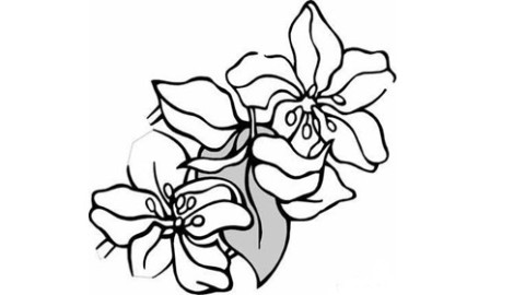 信息中心 简单易学的简笔画花   谁知道有可爱简笔画的表情啊!