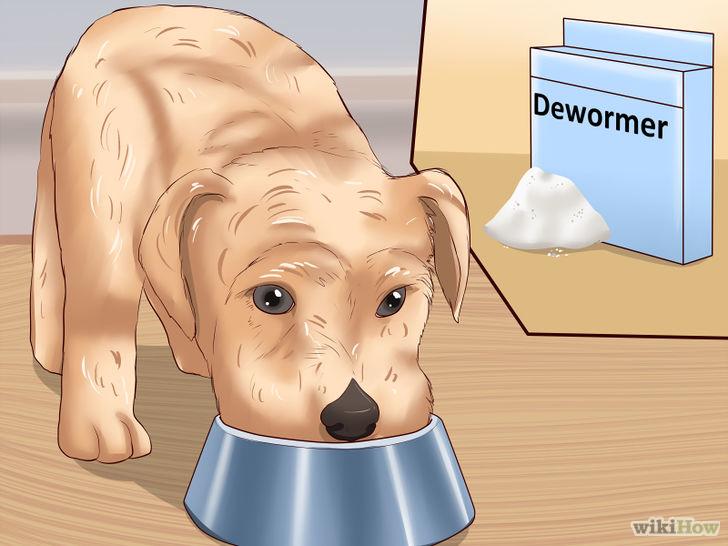1、蛔虫一般由受感染的母狗传给小狗。它们的卵和幼虫可以穿过胎盘,感染子宫里的小狗,卵也会渗入母狗分泌的乳汁里。所以,你应该定期为小狗驱虫。 2、绦虫一般是狗吞食受绦虫感染的害兽(例如老鼠),或被携带绦虫卵的跳蚤传染。所以,猎犬或受跳蚤侵扰的狗最容易感染绦虫。 3、钩虫和鞭虫生长在潮湿的土壤,经常在草地奔跑的狗最容易受感染(尤其是在温暖潮湿的气候下)。住在狗舍、在公共草地上活动的狗最常感染这类寄生虫。 4、犬恶丝虫经由蚊子等昆虫传播,常见于蚊子肆虐的地区。高风险区包括美国东南和中西部、大西洋沿岸地区、澳洲、