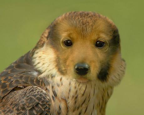 这个是什么动物呀?求解答?