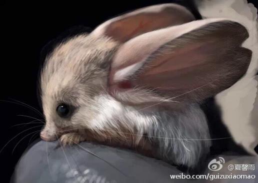 长耳鼠,隶属分类学上属脊椎动物门,哺乳动物纲啮齿目科跳鼠科,而在分类上归于跳鼠总科。长耳跳鼠形态比较特殊,可独自构成一亚科。与其它跳鼠相比,长耳跳鼠吻尖,眼小而耳朵极大,几乎有头体长的一半,是耳朵比例最大的动物。 它被称为沙漠中的米老鼠。 体长8~10.5厘米,尾长15~19厘米,尾端具尾穗;与其他跳鼠相比,吻尖,眼小,耳极大,长3.