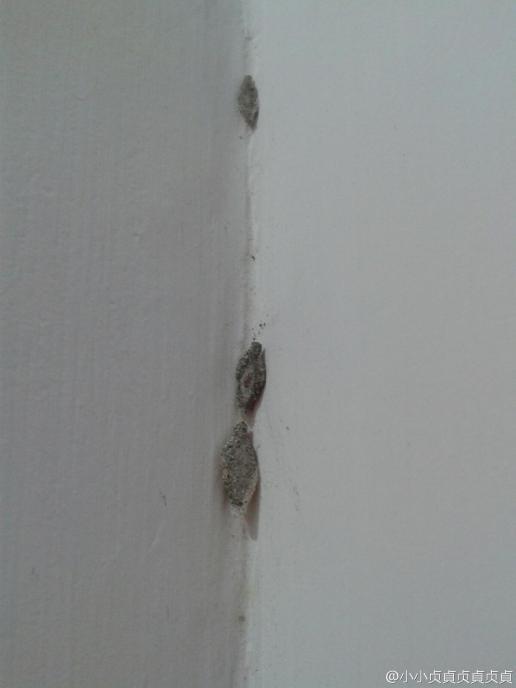 呢d什么小动物?屋企墙边经常出现!
