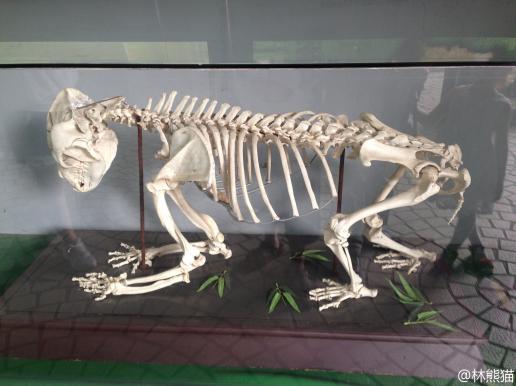 猜猜是什么动物的骨架?
